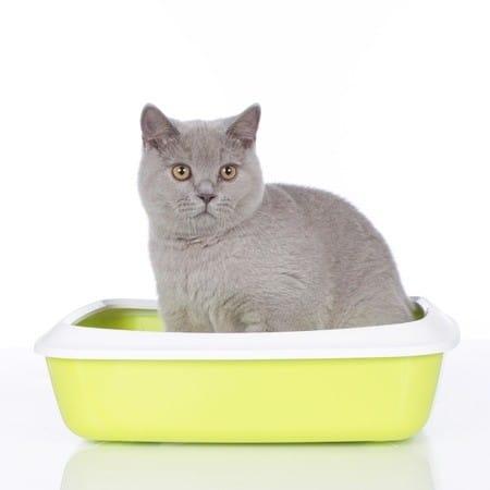 Katzenlo und Zubehör kaufen
