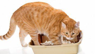 bigstock-Cat-And-Plastic-Toilet-852656871