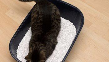 XL Katzenklo für Maine Coon Katze