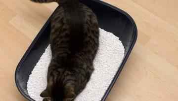 bigstock-Cat-toilet-583815711