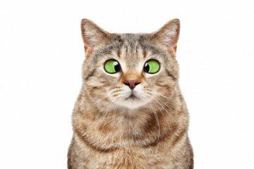 Verdauungsprobleme bei der Katze richtig erkennen und darauf reagieren