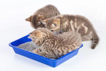 Bio Katzenstreu – Hygienisch und Kompostierbar