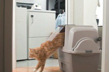 Die selbstreinigende Katzentoilette
