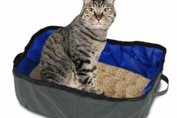 Faltbare Katzentoilette für unterwegs