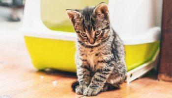 Unsauberkeit Katze – Was kann man dagegen tun?