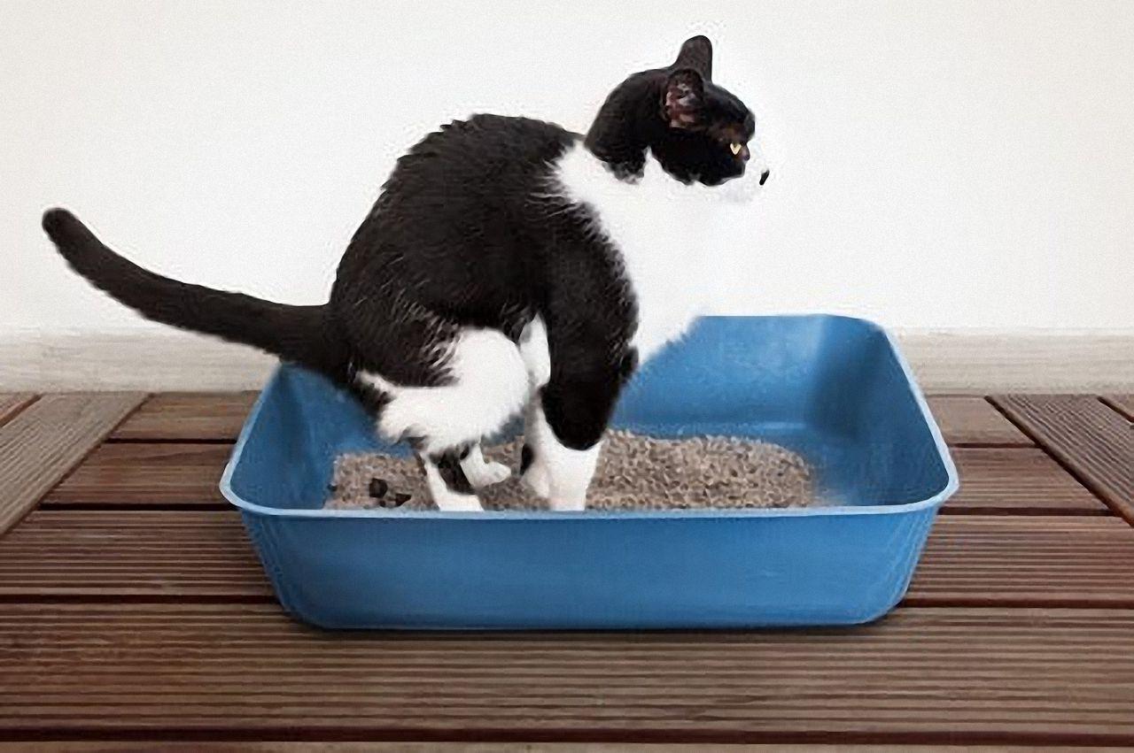 was tun bei verstopfung bei katzen
