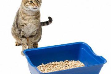 Verstopfung bei der Katze – Was tun?