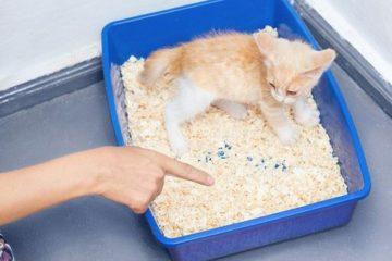 Wie gewöhnt man Katzen ans Katzenklo
