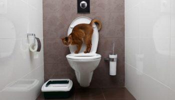 Katzenklo verstecken – Diskret und dekorativ