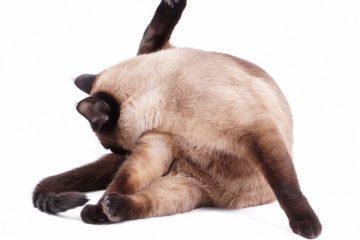 Warum Katzen sich gerne putzen? Gründe für die besondere Reinlichkeit!