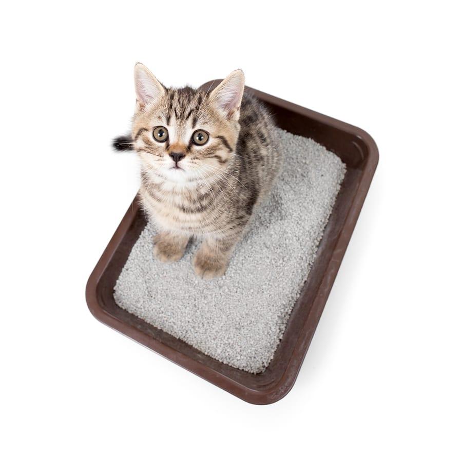 Silikateinstreu für Katzen. Hochwertiges Einstreu für die katzentoilette. Foto: Andrey_Kuzmin/Bigstock