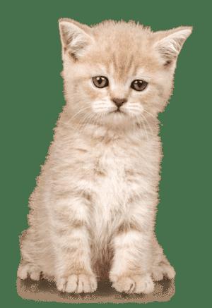 Katze - Reinliche Tiere