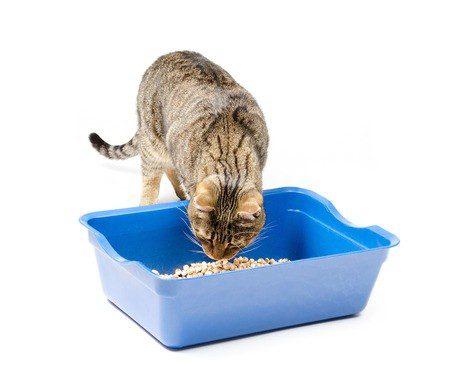 Katze prüft die Wahl des richtigen Katzentreus