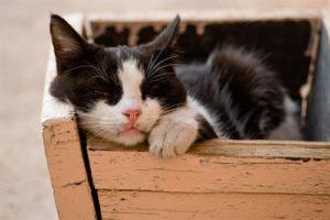Ruhiges Plätzchen für die Katze