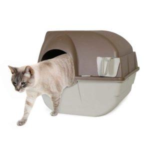 Saubere Katzentoilette beutet eine zufriedene Katze