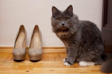 Pinkelt ihre Katze gerne in Schuhe?