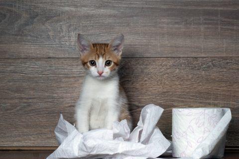 Protestpinkeln Katze - Wenn der Stubentiger plötzlich Unsauber wird