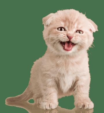 Oft wohlen uns unsere Katzen mit plötzlicher Unsauberkeit einfach nur etwas mitteilen was ihnen nicht mehr passt. Achten Sie deshlab auf alle Veränderungen im Katzenhaushalt als Ursache.