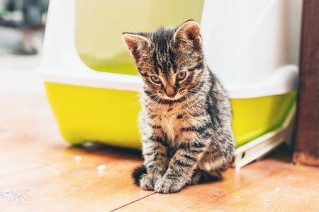 Unsauberkeit bei der Katze – Was kann man dagegen tun?