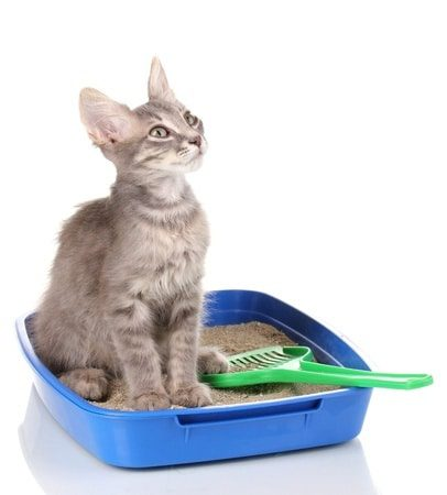 Eine einfache Schale als Katzentoilette ist zumeist völlig ausreichend. Sie ist günstig, lässt sich flexibel aufstellen und wird von den allermeisten Katzen gut angenommen.
