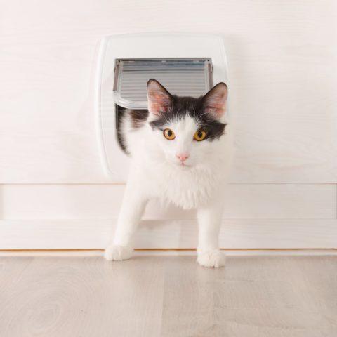 Katzenklo im Schrank kaufen oder selber bauen