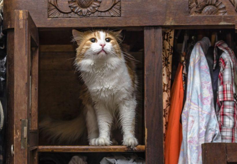 Katzenklo diskret im Schrank versteckt