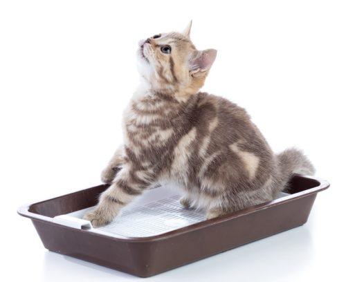 Katzentoilette mit Sieb - Siebeinsatz für das Katzenklo