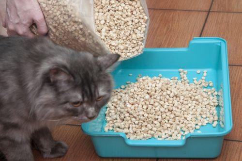 Staubfreies Katzenstreu - Streu mit wenig Staubentwicklung