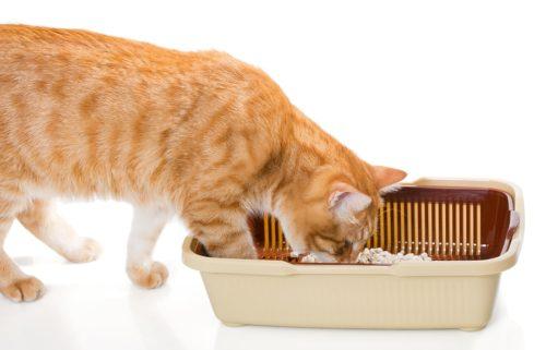 Saubere Katzentoilette