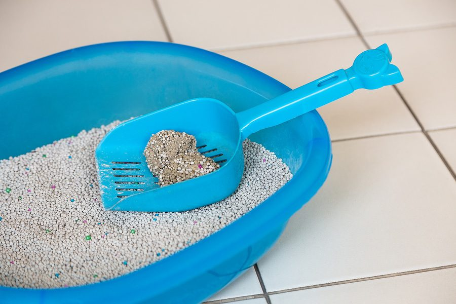 Katzentoilette reinigen - Halten Sie das Katzenklo sauber
