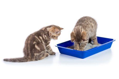 Katze uriniert neben Katzentoilette