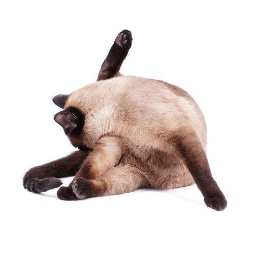 Ständiges Putzen der Katze