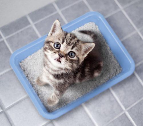 Verdauungsstörungen bei Katzen und die Folgen