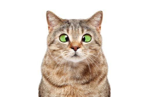 Verdauungsprobleme Katze