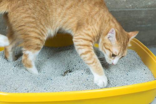 Katzenpflege und Hygiene