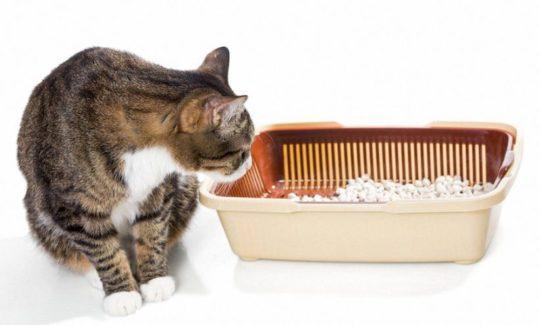 Katzenklo und Zubehör online kaufen