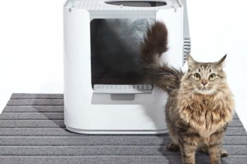 Modkat Katzentoiletten – Innovative Katzenklos für besonders hohe Ansprüche