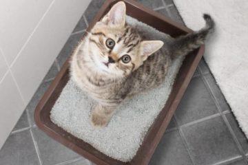 Ratgeber Katzentoilette: Für Katzen das passende Katzenklo
