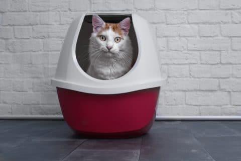 Schalentoilette für Katzen