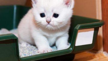 Wie bekomme ich meine Katze stubenrein?