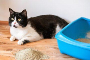 Katzenklo Vorleger – Katzenstreumatte