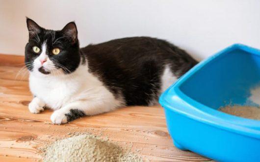 Katzenstreu vor Katzenklo verteilt