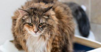 HArnsteine bei Katzen