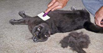 Fellprobleme bei Katzen