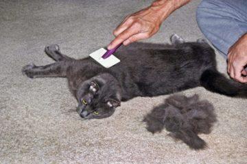 Haarausfall und Fellprobleme bei Katzen – Ursachen