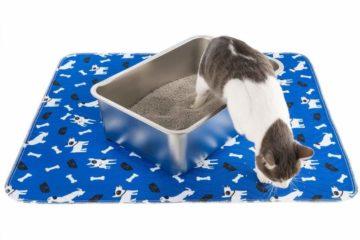 Katzentoiletten aus Edelstahl – Rostfrei und Antihaftbeschichtet