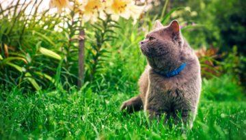 Duftmarkierung der Katze im Garten