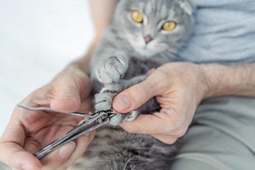 Krallenpflege bei der Katze