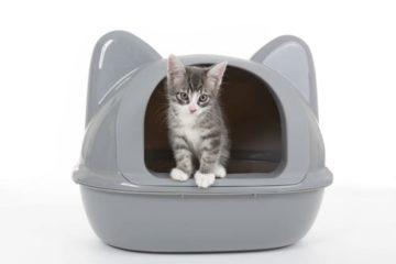 Ecktoiletten für Katzen – Das Katzenklo für die Zimmerecke