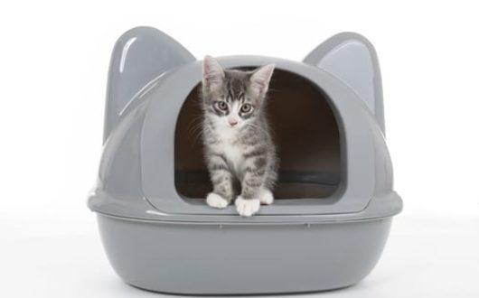 Ecktoilette für Katzen